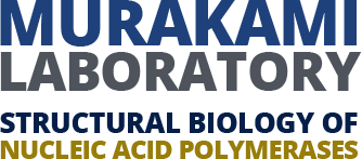 Murakami Laboratory Logo